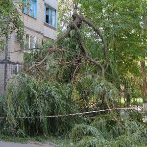 Что входит в санитарное содержание придомовой территории многоквартирного дома: что включает в себя перечень работ, кто должен косить траву и спиливать деревья?