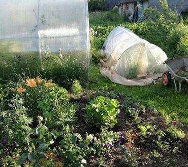 С чего начинать межевание садового участка и как правильно провести процедуру в садоводстве или СНТ?